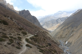 Ascending to Thorung Pedi